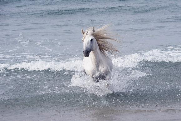Julie Testwuide - 16. White Stallion AP