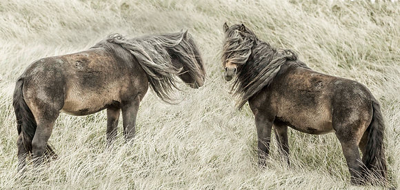 Whirlwind on Sable Island