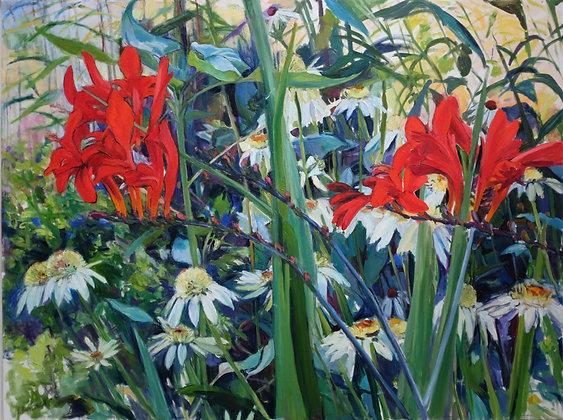 Canna Lillies & Echinacea