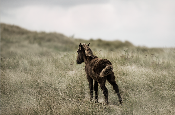 Lost on Sable Island 6/50