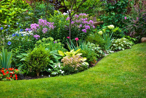 Plantas para jardim: conheça as principais espécies para ter um jardim perfeito