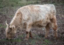 calves-1-13.jpg