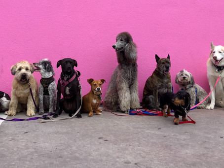 Dogs and Human Diversity