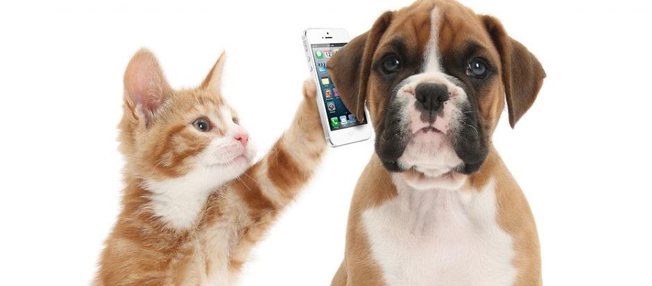 DogCatAndPhone900 (1).jpg