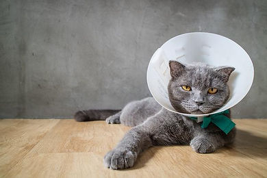 Cat Cone1.jpeg