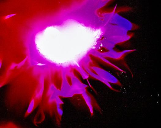 Ravaged Flower of the Future