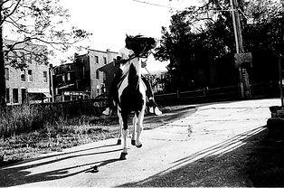 horse in motion.jpg