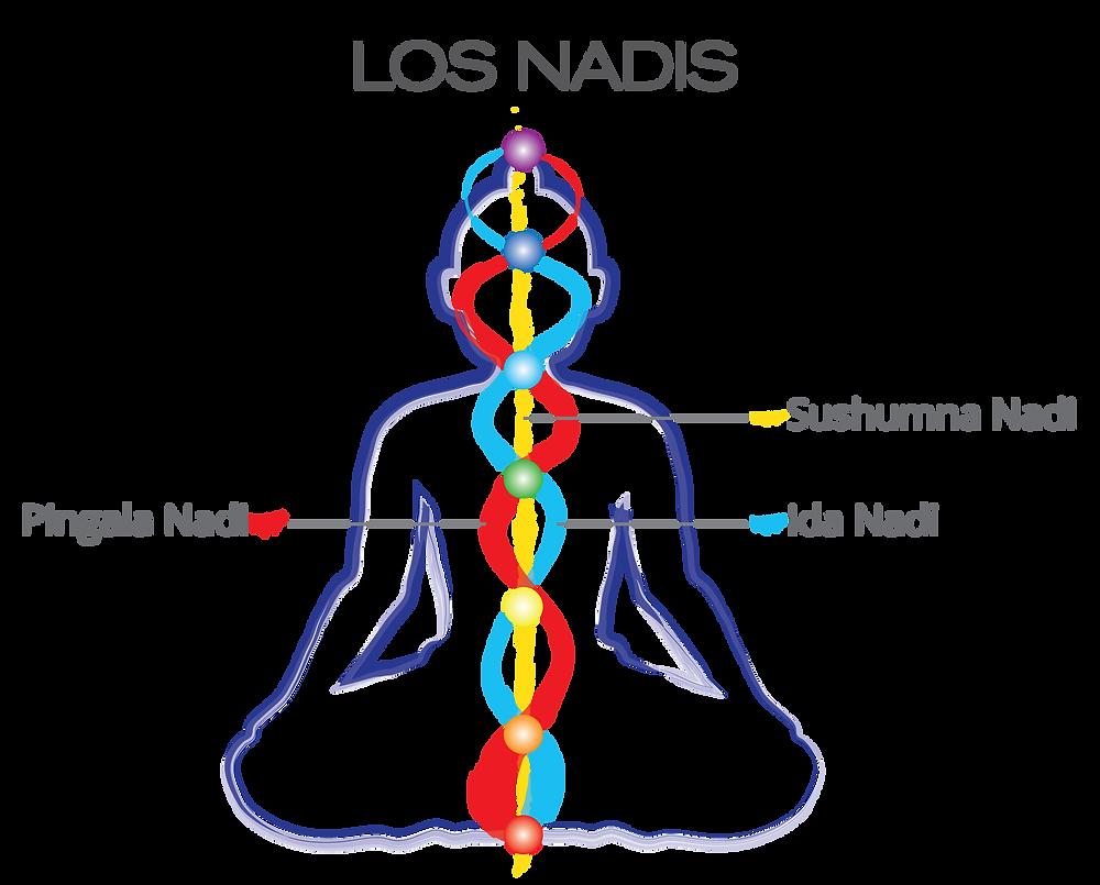 Imagen 1 Nadis