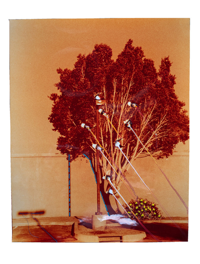 Punctured Orange Tree - Bleeding with Blue Embroidery, 2021  Chemically altered chromogenic photograph accentuated with thread and embroidery floss  20 x 16 ins (50.80 x 40.64 cms)