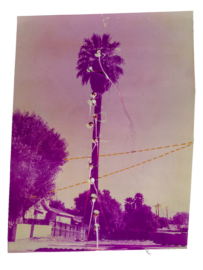 Purple Punctured Palm Tree with Orange Floss, 2021  Chromogenic print chemically altered & accentuated w/ floss  20 x 16 ins (50.80 x 40.64 cms)