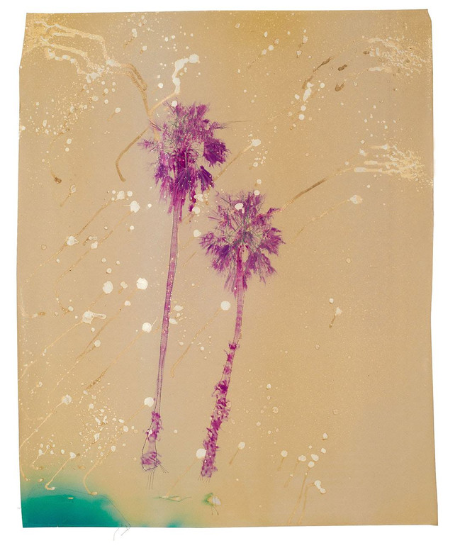 Acid Pink Palm Trees, 2016  Chemically altered chromogenic photograph accentuated with thread  28.00 x 24 ins (71.12 x 60.96 cms)