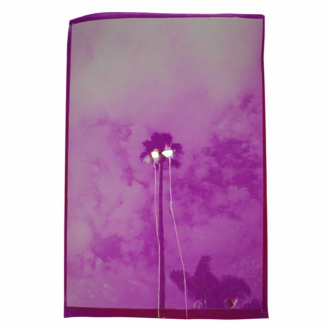 Untitled (Punctured pink palm tree), 2020  Chemically altered chromogenic photograph accentuated with thread  26 x 17 ins (66.04 x 43.18 cms)