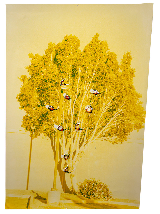 Punctured Yellow Tree, 2019  Chromogenic photograph punctured and chemically altered  20 x 16 ins (50.80 x 40.64 cms)
