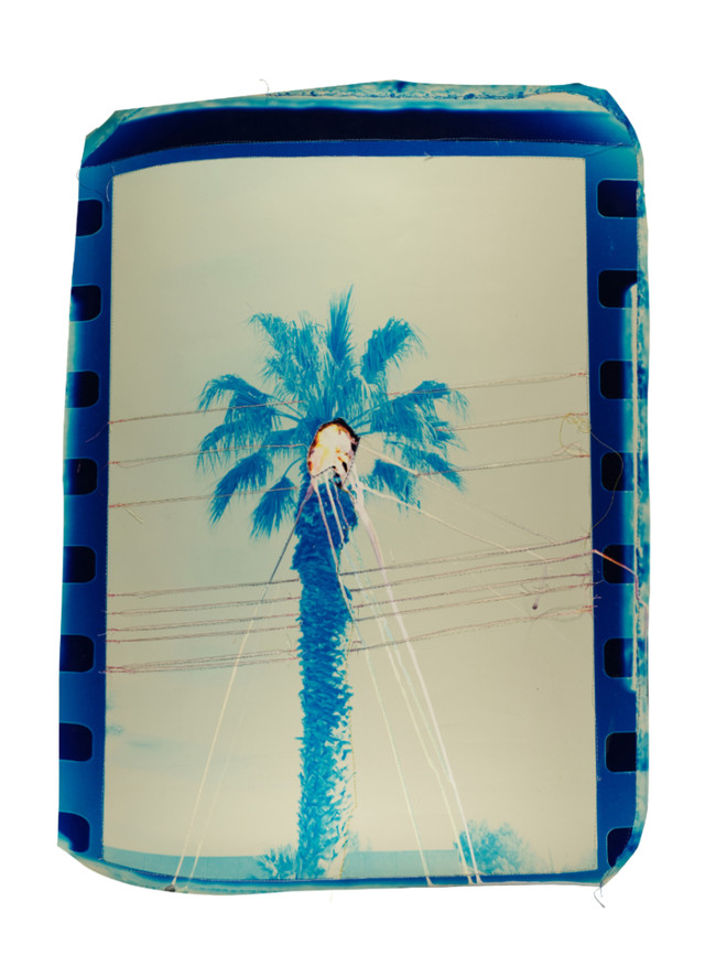 Punctured Blue Palm Tree, 2018  Chemically altered chromogenic print accentuated with thread  23 x 18 ins (58.42 x 45.72 cms)