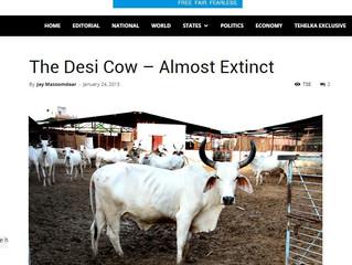 Endangered Bovine Breeds of India