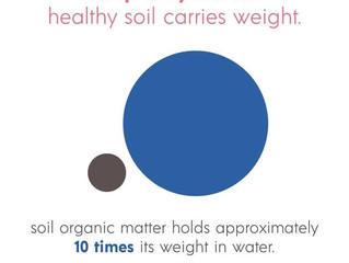 Invest in Soil Today, For Water Tomorrow