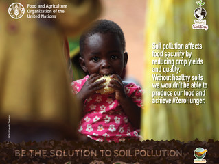 Healthy Soil - Vital For Clean Food, Water & Air!