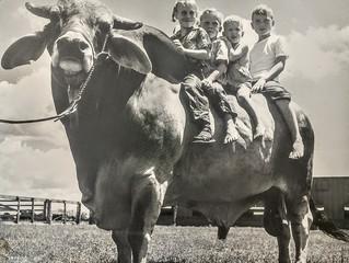 History of Desi Bulls Abroad
