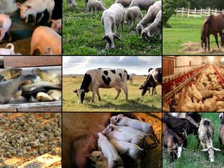 Panchgavya For Animal Health