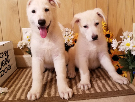 Blanche and Dutch