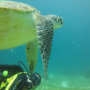 Barracuda Buceo Alona Beach Dive