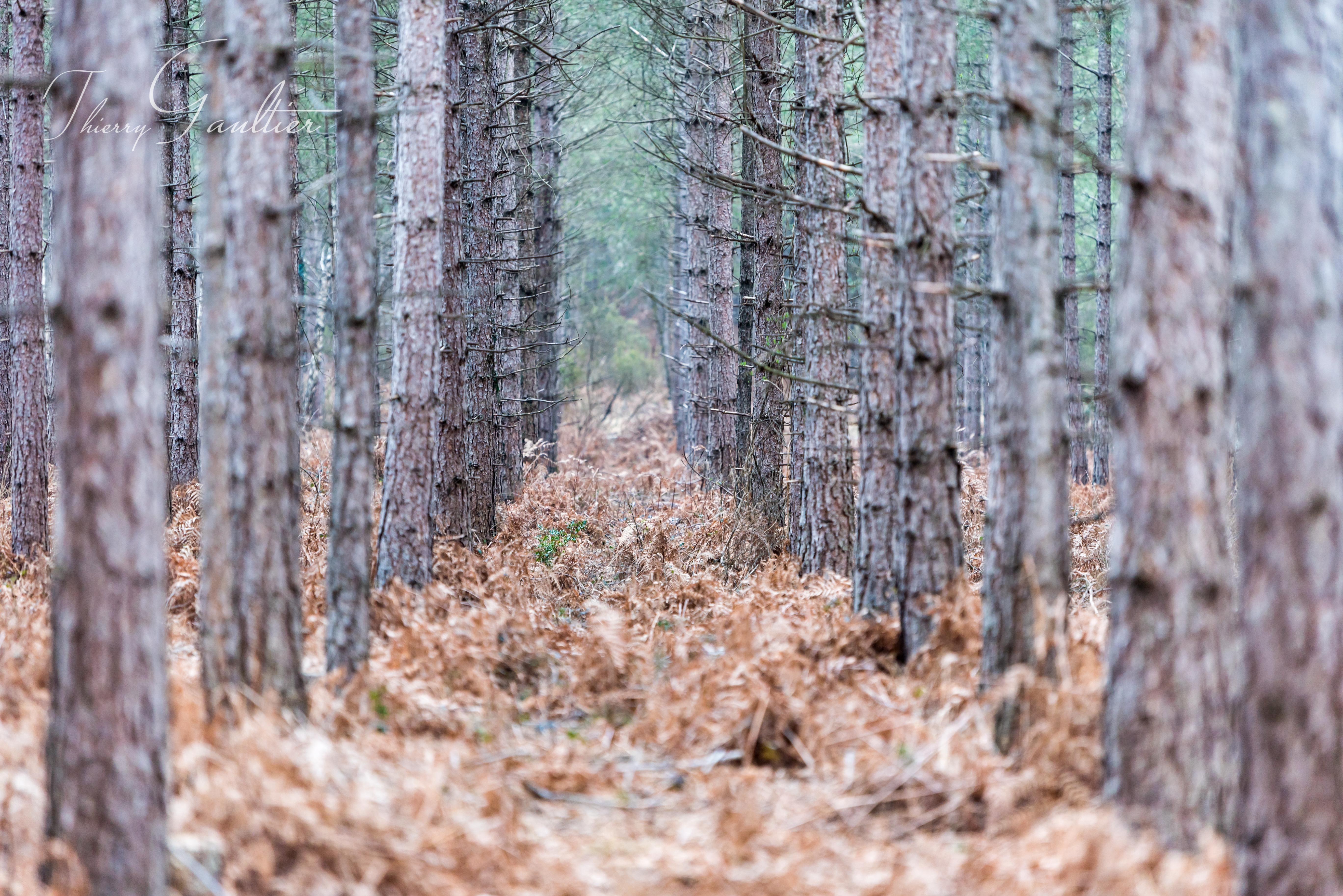 Forêt de VERNEIL-SUR-INDRE