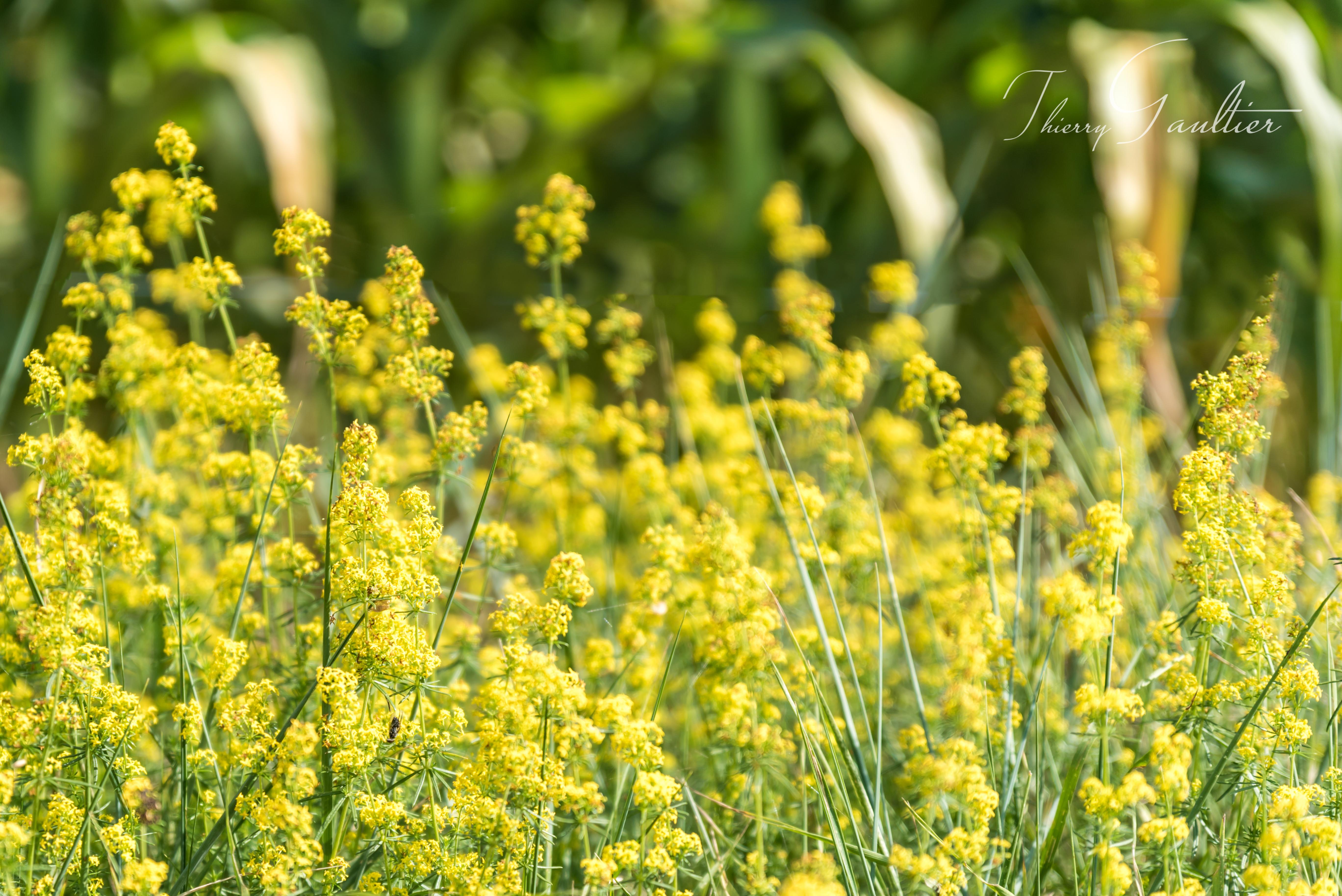 Petites fleurs printanières
