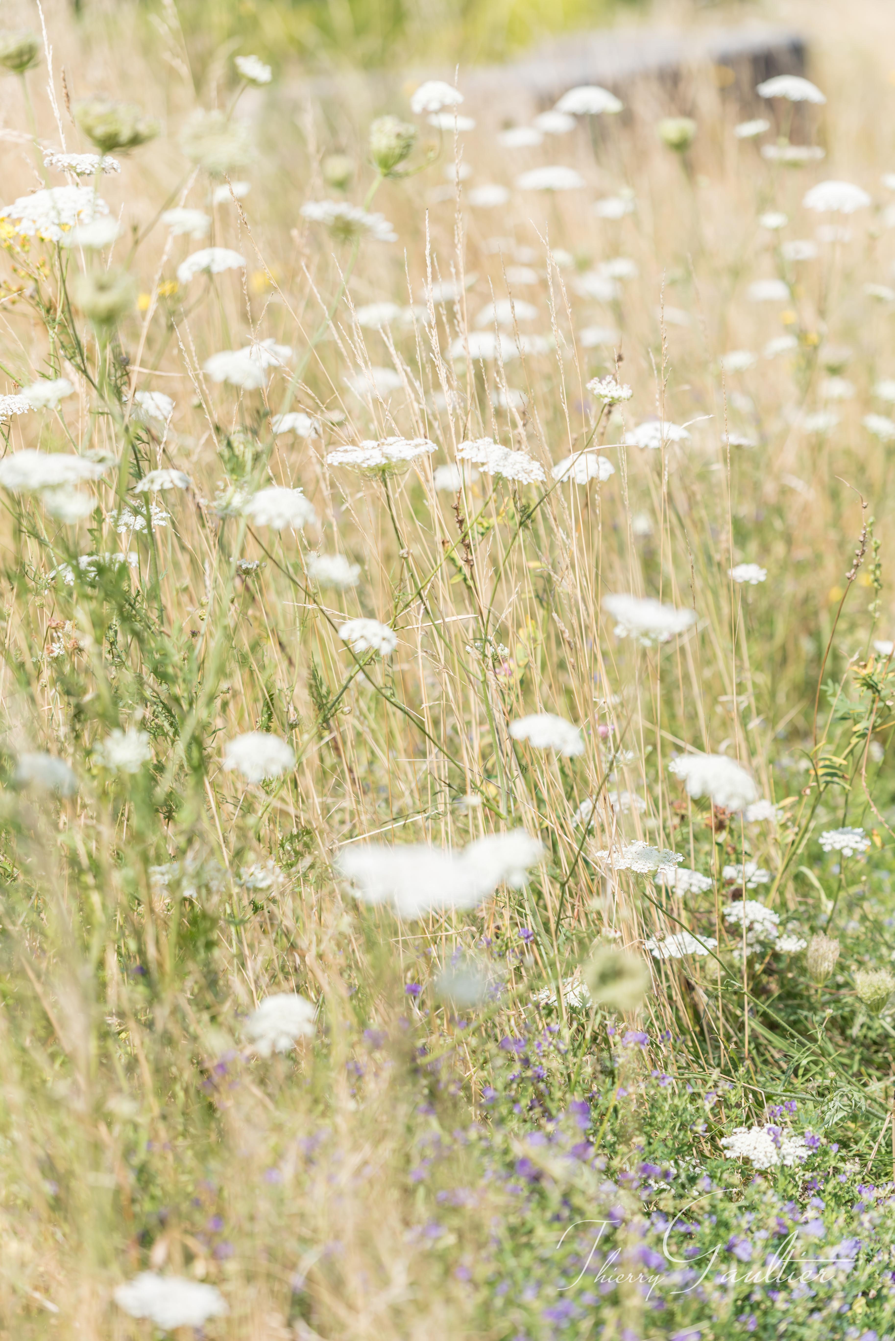 Bordure de champs dans le LOCHOIS