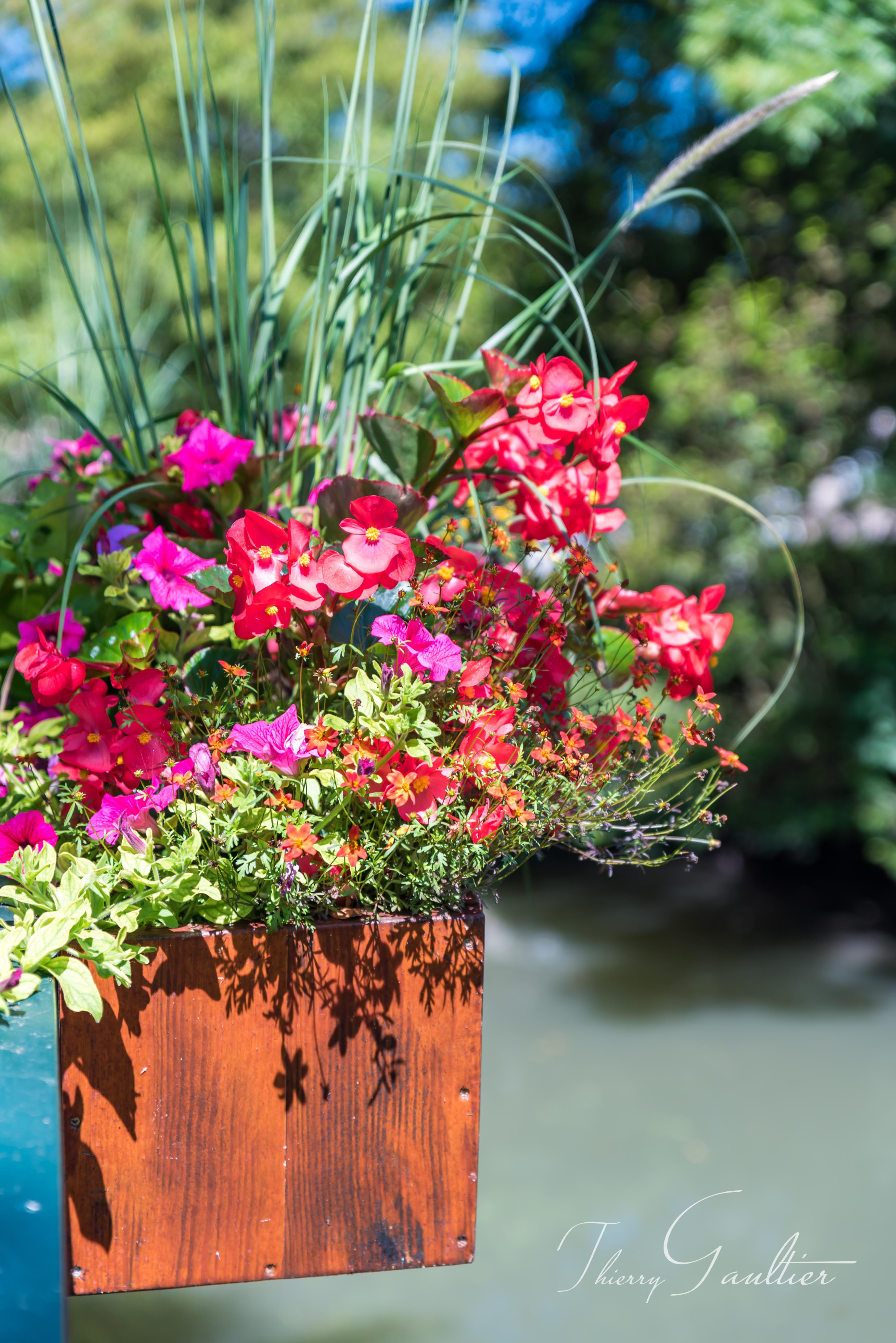 Pot de fleurs à MONTRÉSOR