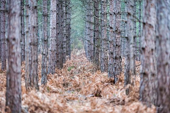 Forêt de VERNEIL