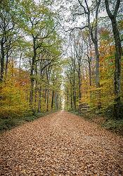 Forêt de Loches en Automne