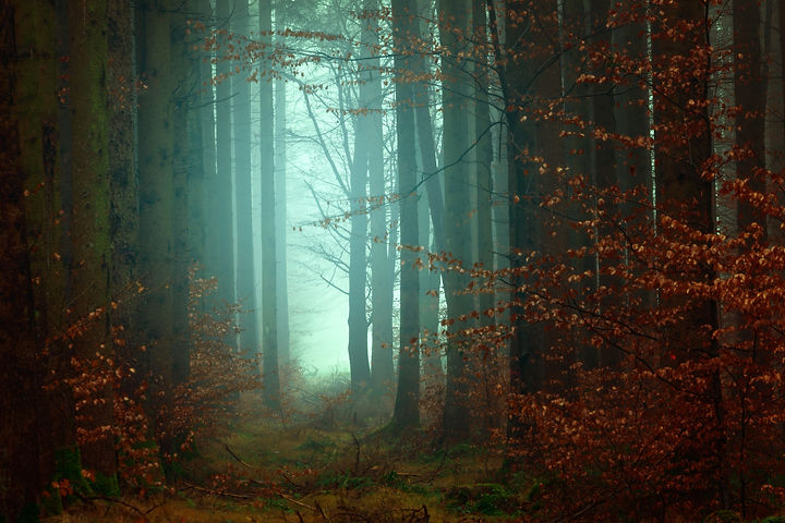 Fall Foggy Forest