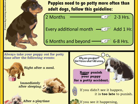 How long does it take to potty train a puppy?