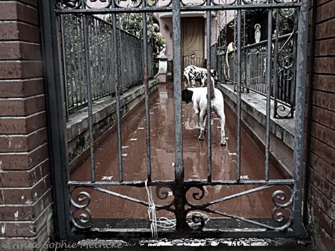 ASM_Meta_dogs1.jpg