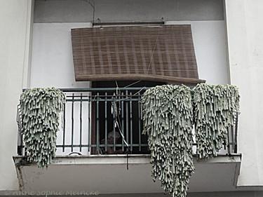 ASM_Meta_balcony with pines1.jpg