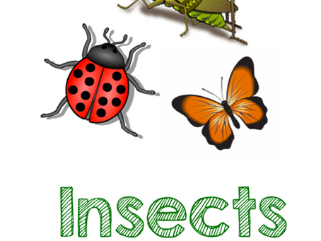 Insects: April 6-10th