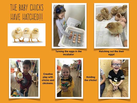 Chick Documentation .002.jpeg