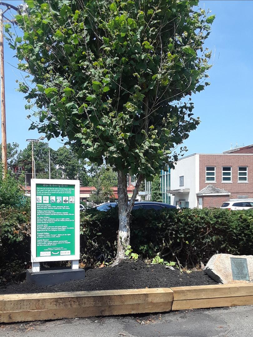Liberty Tree Project