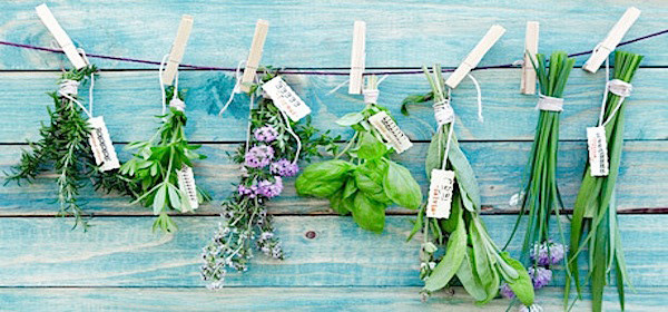 Herbs Hanging.jpeg