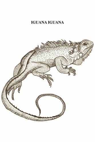 La iguana verde, por el color de su piel le permite confundirse perfectamente con la vegetación que hay en su entorno. Su piel está recubierta de pequeñas escamas; tienen una cresta dorsal que recorre desde su cabeza hasta su cola, esta es muy vistosa en los machos. Se encuentra en América Central y de Sudamérica, desde México hasta el sudeste de Brasil y el Pantanal del Paraguay, así como también en islas del Caribe y, de manera asilvestrada, en Florida (Estados Unidos). Viven principalmente en regiones bastante húmedas, como la selva mexicana y brasileña. Son herbívoros y se reproducen por medio de huevos, que son colocados bajo tierra durante el mes de febrero (verano austral). Se destacan por sus espectaculares exhibiciones en los rituales de defensa y cortejo, en los que levantan el cuerpo mientras agitan con fuerza la cabeza de arriba a abajo. El macho cambia el color de su piel a naranja. Al ser reptiles, son de sangre fría, con lo que con los primeros rayos de sol, suben a las ramas más altas para alcanzar la temperatura óptima «operativa», aproximadamente entre 28-35 °C. Las iguanas son animales bastante solitarios y sólo viven en comunidad mientras dura el periodo de celo y reproducción. Forman una jerarquía en la cual el macho dominante tiene mayores privilegios (sobre las hembras, lugar para tomar el sol, etc.). El uso de las especies de iguanas por las comunidades locales en Latinoamérica como alimento de subsistencia ha representado una fuente importante de proteínas con alto valor nutricional en los trópicos de América desde hace cientos de años. La caza de iguanas se ve reflejada en numerosas culturas del Pacífico y América Central, donde es utilizada principalmente como alimento, consumiendo la carne y huevos por considerarse afrodisíacos y deliciosos prácticamente en todas las regiones donde habita, principalmente por la población rural. Durante los últimos años, las iguanas verdes han sido perseguidas con fines comerciales como el negocio peletero
