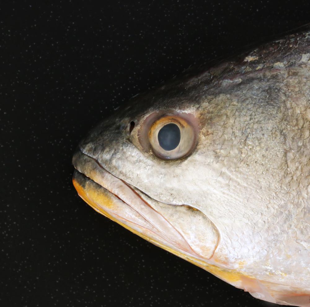 Reconoce la frescura de pescados