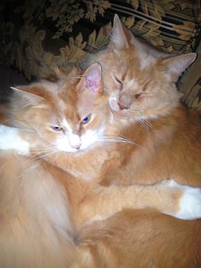 LAURAS CATS.jpg