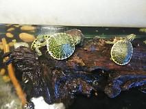 Baby turtle .jpg