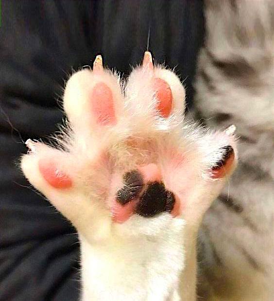 Cat Nail Trimming