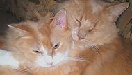 LAURAS CATS_edited.jpg