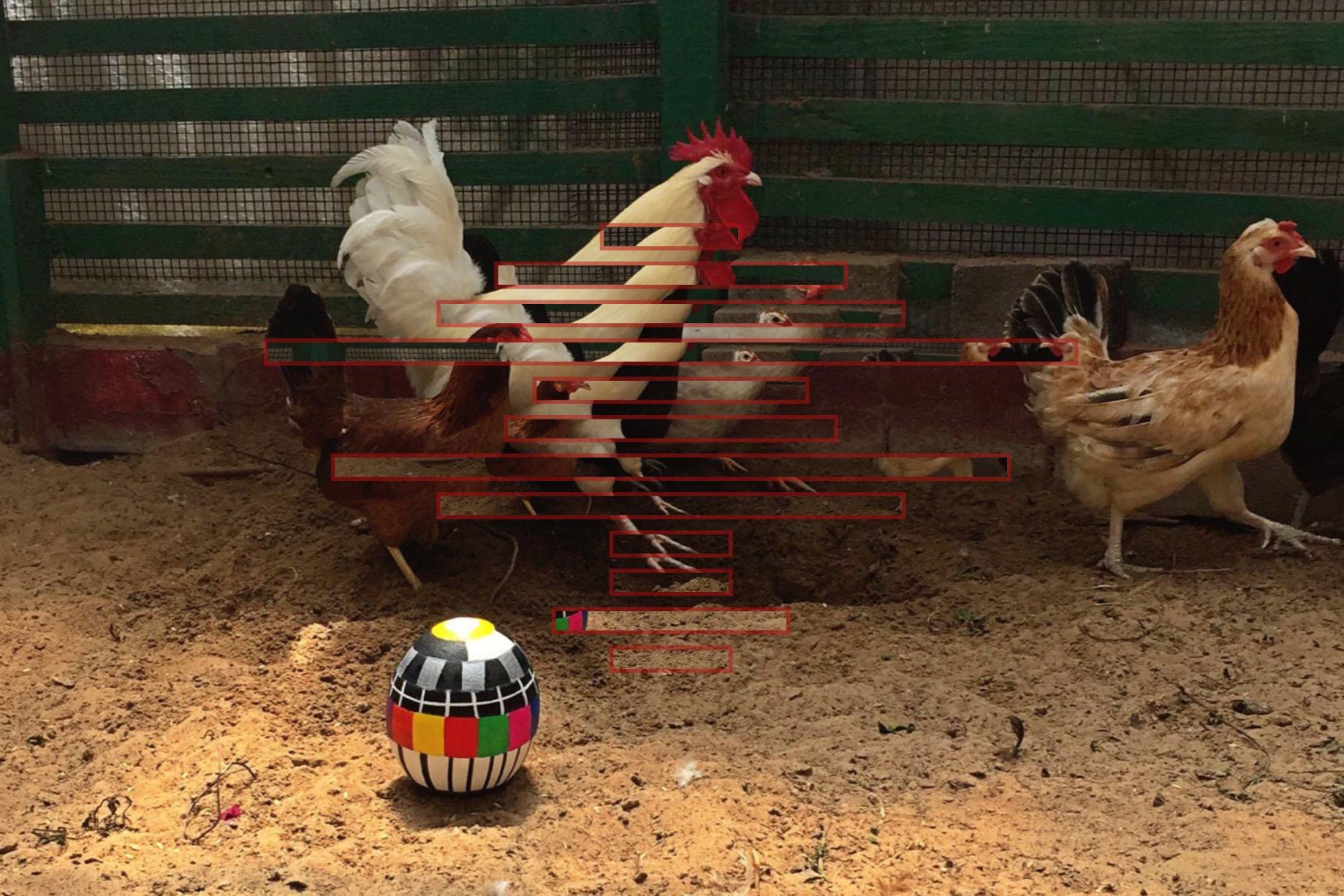 cock hen series 1