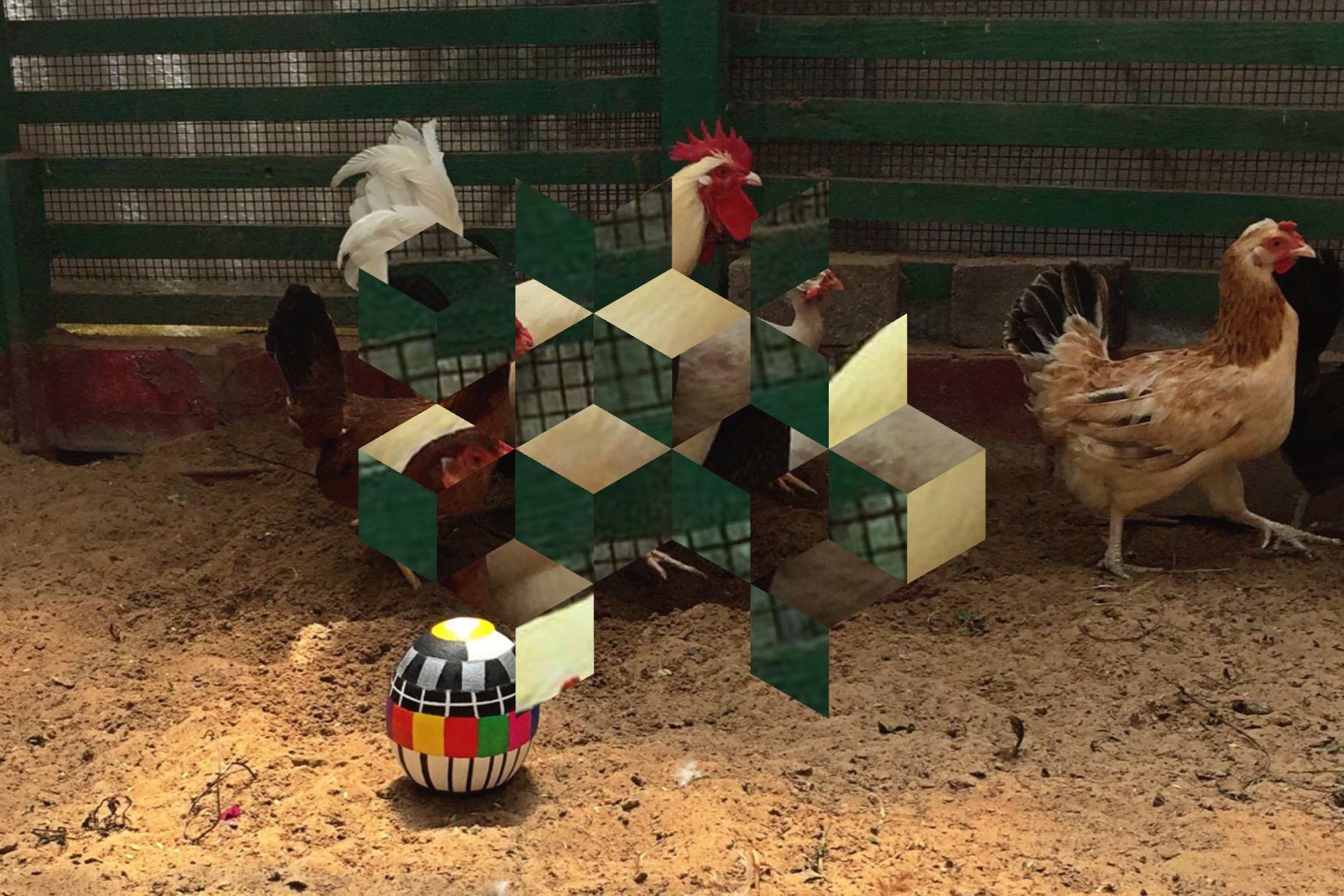 cock hen series 2