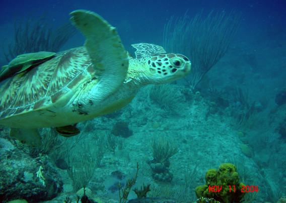 green turtle2.jpg
