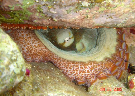 octopus1.JPG