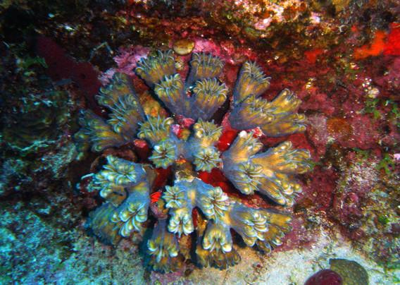 hard coral.jpg